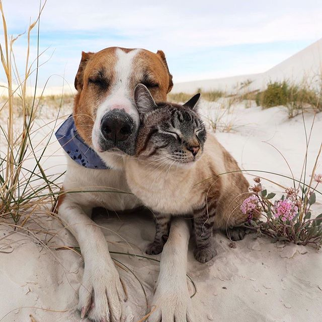 From Henrythecoloradodog Caught Baloo Lovin On Henry Catsofinstagram Feed Generated With Fetchrss Animals Friends Dog Adventure Cute Cat Gif