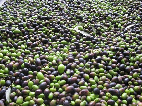 Thriving On Love And Olive Oil | Are olives an aphrodisiac http://zesterdaily.com/world/cimicchi-family-olive-oil-italian-imports/