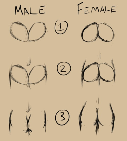 A step-by-step of how I draw butts. Kinda simple.  Male:   Draw 2 Face shapes, facing each other.  Draw outline of hips and legs  Details, erase parts  Female:  Draw 2 Face shapes, upside down, facing each other.  Draw outline of hips and legs  Details, erase parts
