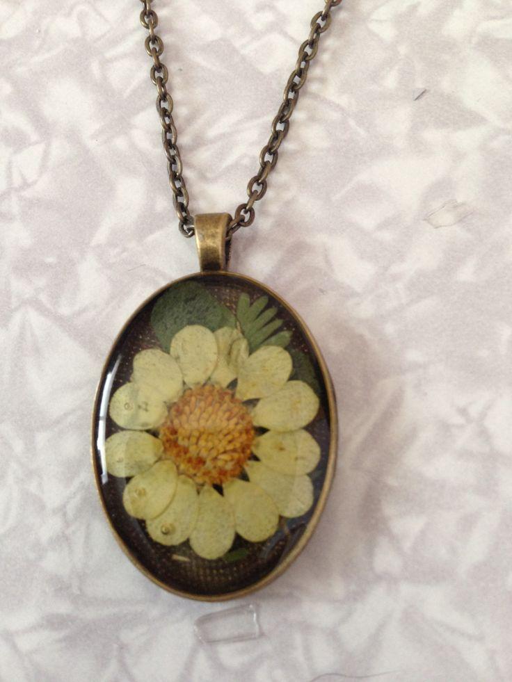 Miniature daisy