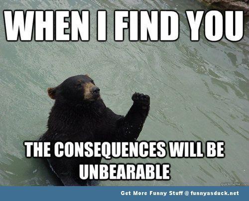 funny bear sayings Funny Bear funnybearpicturememe