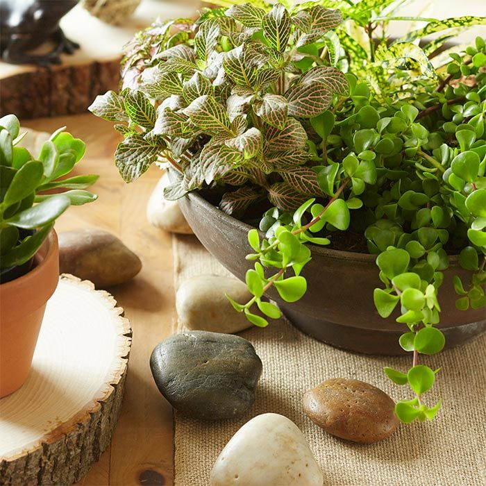 17 best images about garden indoor plants on pinterest for Easy to take care of outdoor plants
