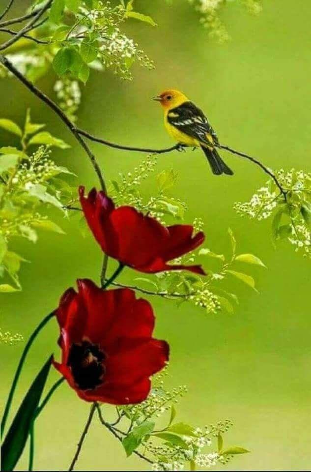 Pin De Genoveva Martinez En Primavera Pajaros Flores Y Mariposas Pajaros Hermosos Aves De Colores Pajaros Bonitos