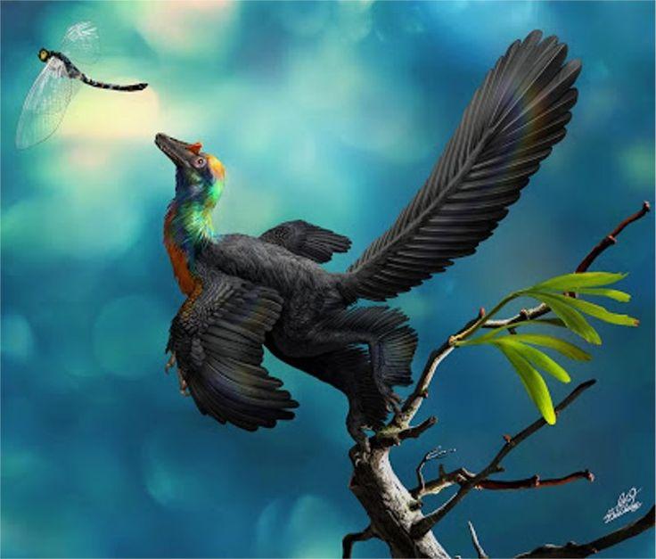 """Con todos ustedes ... """"Caihong juji"""", el dinosaurio arco iris que dejó maravillados a los investigadores #dinosaurio #dinosaurios #dinosaurs  #noticia #noticias #animales #animal #schnauzi"""