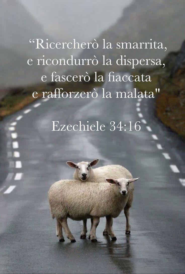Ezechiele 34:16