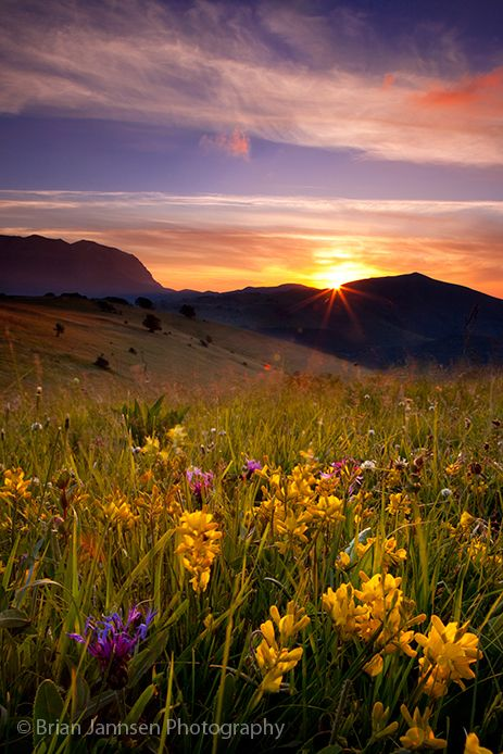 IT_2232 Wildflowers at sunrise near Monti Sibillini, Umbria Italy