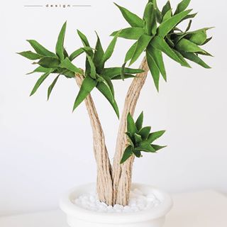"Nuova pianta ""yucca"" www.movea.it #cactus #moveadesign #green #greendesign #handmade #madeinitaly #design #salento #homdecor #home #nature #cactuslove #succulent #piantegrasse #flowerdesign #plantlife #botanical #garden #livingroom #intdoor #plant #interiordesign #indoorplants #indoorplants #original#urbanjungle"