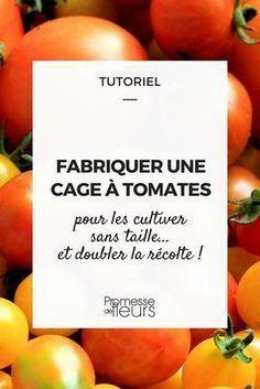 Cage à tomates : le tuto ! Découvrez comment la fabriquer, pas à pas et doublez vos récoltes... #tuto #potager #tomate #permaculture