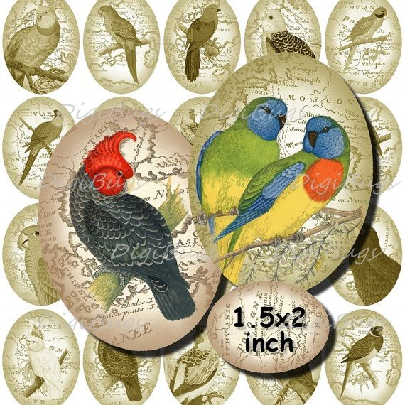 Oval Parrot Images, Digital Collage Sheet, Printable Vintage Map 1.5 x 2 inch Ovals, Jewelry Images for Pendants, Parrot Download, a2