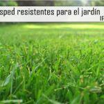 Tipos de césped resistentes para el jardín mediterráneo.