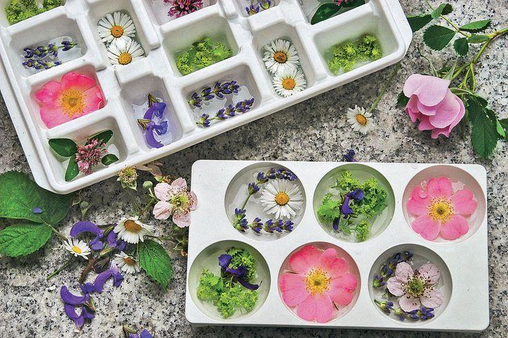 Sie wollen bei Ihren Gästen Eindruck schinden? Wie wäre es mit etwas besonderes Eiswüfeln aus dem Garten.   Cocktails und Drinks lassen sich für die Gartenparty mit Blüten-Eiswüfeln perfekt in Szene setzen. Neben Eiswürfelbehältern und stillem Mineralwasser benötigen Sie dazu essbare Blüten, zum Beispiel Rosen, Lavendel, Rot-Klee, Gänseblümchen, Salbei und Frauenmantel. Etwas Wasser in die Vertiefungen geben, die Blüten darin verteilen, dann die Behälter vorsichtig ins Kühlfach stellen…