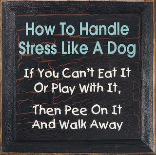 Excellent suggestion....How to handle stress like a dog...If you can't eat it or play with it then pee on it and walk away!