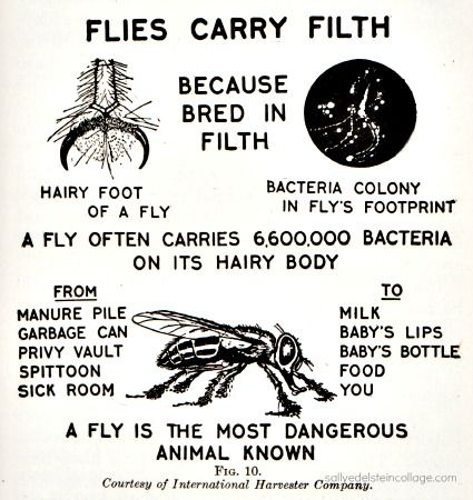 "Vintage diagram ""A Fly is the Most Dangerous Animal Known"" from American Red Cross Text Book on Home Hygiene 1933"