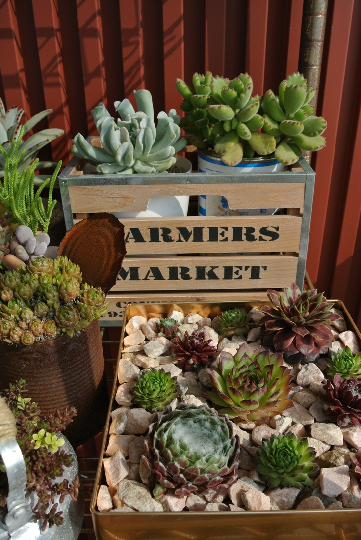 succulents  I need something like this for my coffee table  Home  Painting wicker furniture