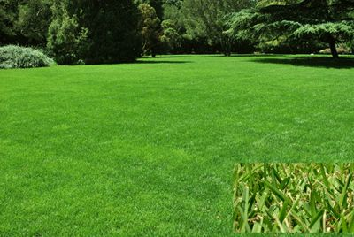 How To Fix An Ugly Lawn | For Beginners - YouTube