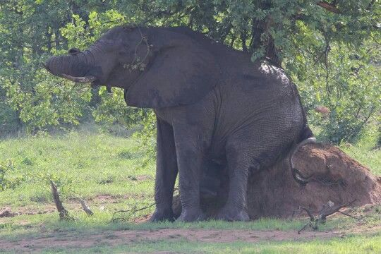 Taking a break in the hot weather - Kruger National Park