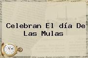 http://tecnoautos.com/wp-content/uploads/imagenes/tendencias/thumbs/celebran-el-dia-de-las-mulas.jpg Dia De Las Mulas. Celebran el día de las mulas, Enlaces, Imágenes, Videos y Tweets - http://tecnoautos.com/actualidad/dia-de-las-mulas-celebran-el-dia-de-las-mulas/