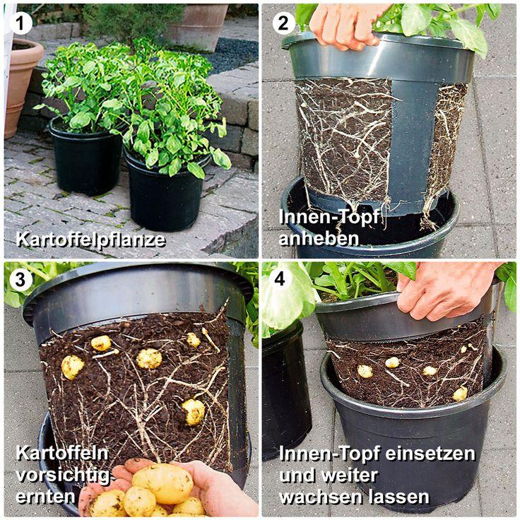 kartoffel pflanztopf potatopot 2 garten m bel f r. Black Bedroom Furniture Sets. Home Design Ideas