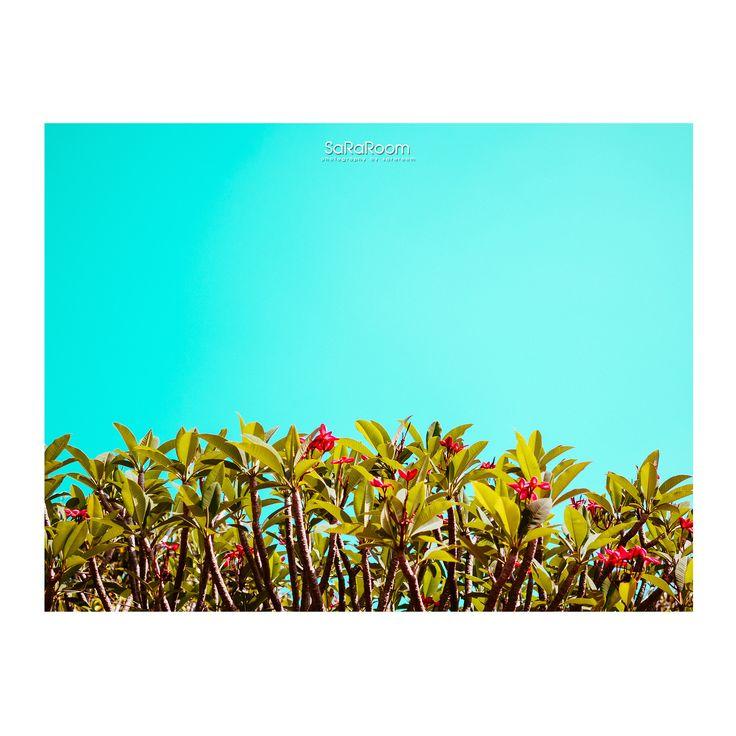 Minimal #flower #landscape #panasonicgx8 #gx8 #photography #minimal