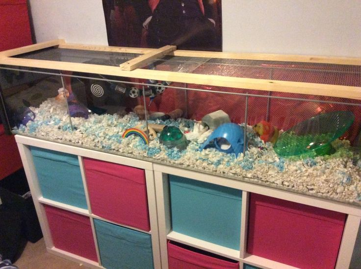 Pet Room Ideas Hamster