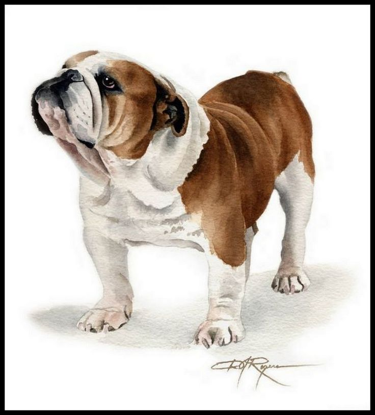 87 best Bulldogs drawing images on Pinterest | English bulldogs ...