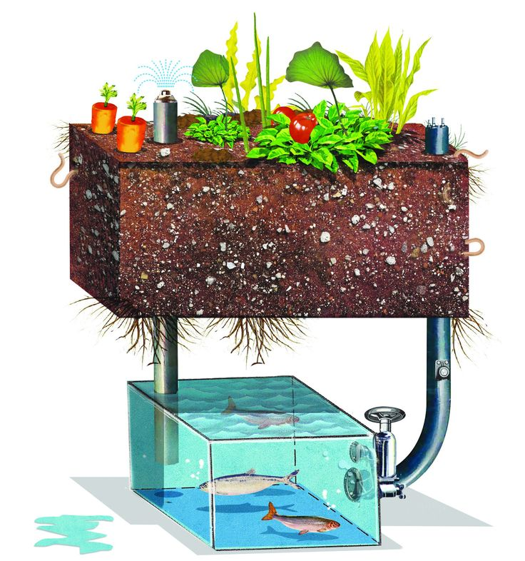 Build an aquaponic garden with arduino gardens