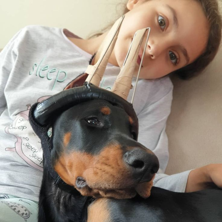 Barking Dog A What Does Your Dogas Bark Mean Doberman