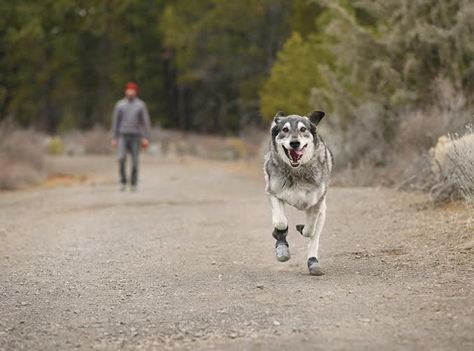 Dog Walks: To Shoe or Not To Shoe?