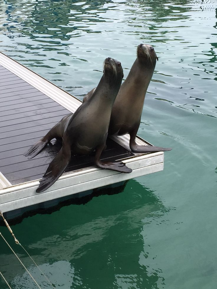 These two cheeky guys at SeaWorld on the Gold Coast QLD were my favourite. So curious! Dont forget to check out the Dolphin Show and all the other great things on offer.