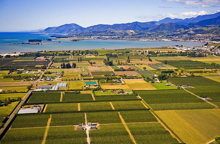 The vineyards of Richmond, with Nelson beyond, see more, learn more, at New Zealand Journeys app for iPad www.gopix.co.nz