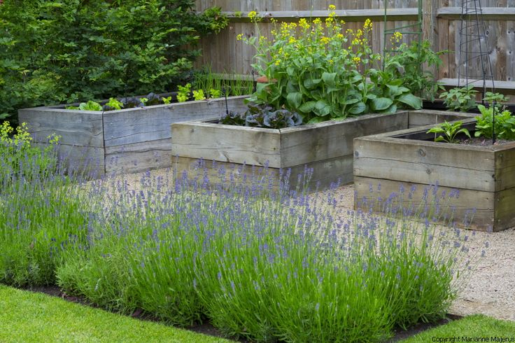 Contemporary architectural garden in Kensington, West London