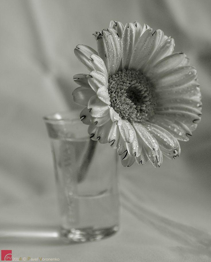 One Shot of Spring by Pavel Voronenko on 500px