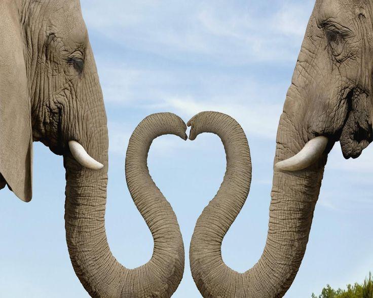 12 best go team go images on pinterest for Elephant heart trunk