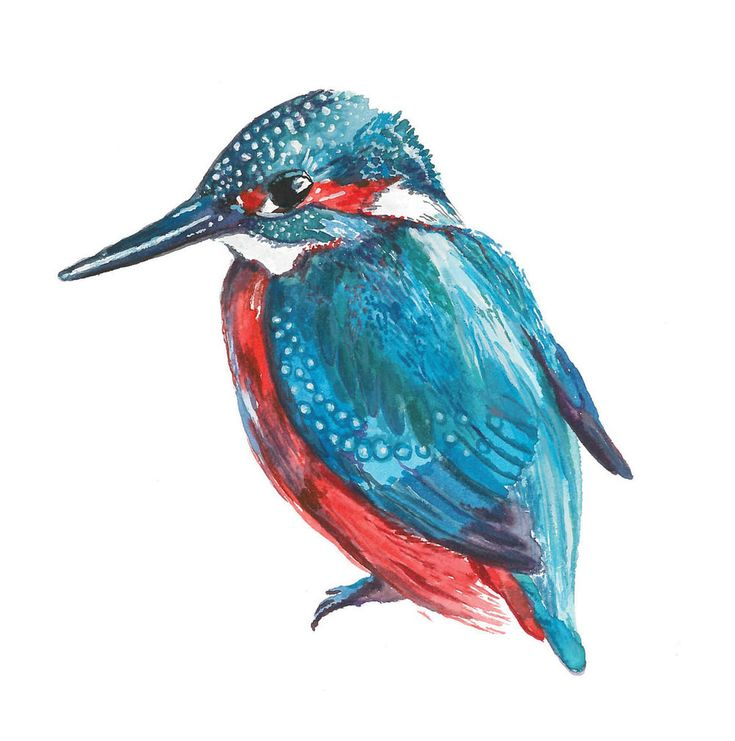 Square-Kingfisher-Cover.jpg