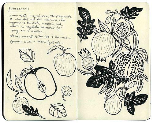 Brooklyn-based illustrator, Caitlin Keegan. sketch Pomegranate