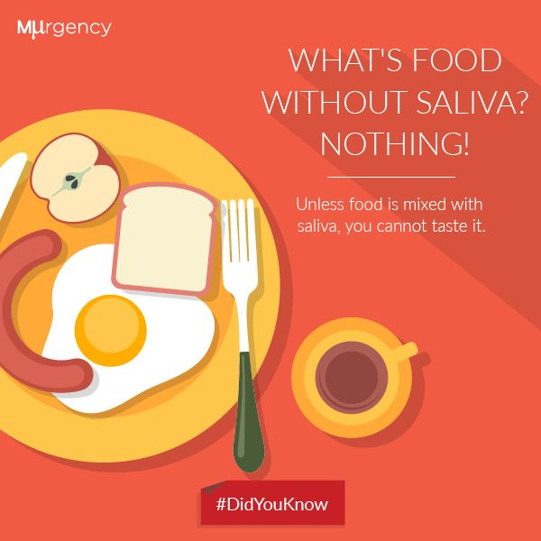 What is food without saliva?
