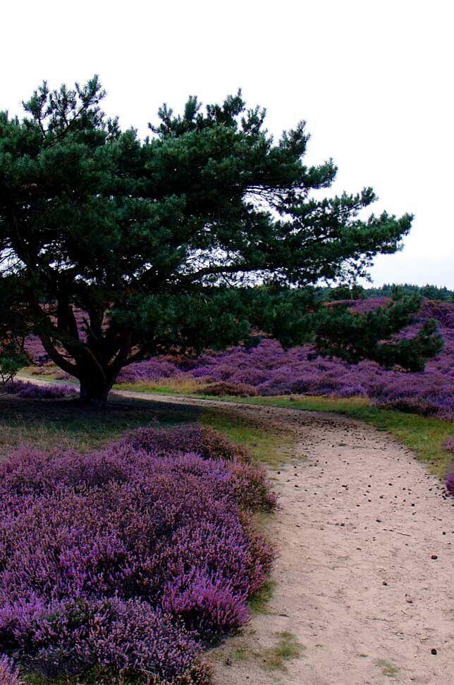 Drouwenerzand, Drenthe. Inspiratie voor kleurrijke recreatieprojecten. www.instyleconcepts.nl