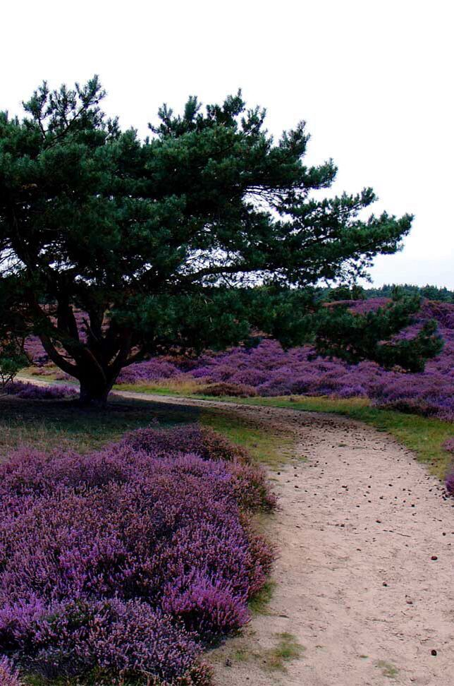 The #Netherlands - #Drenthe- Drouwenerzand