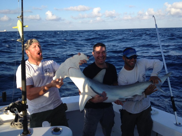 17 best images about shark fishing on pinterest fishing for Shark fishing charters