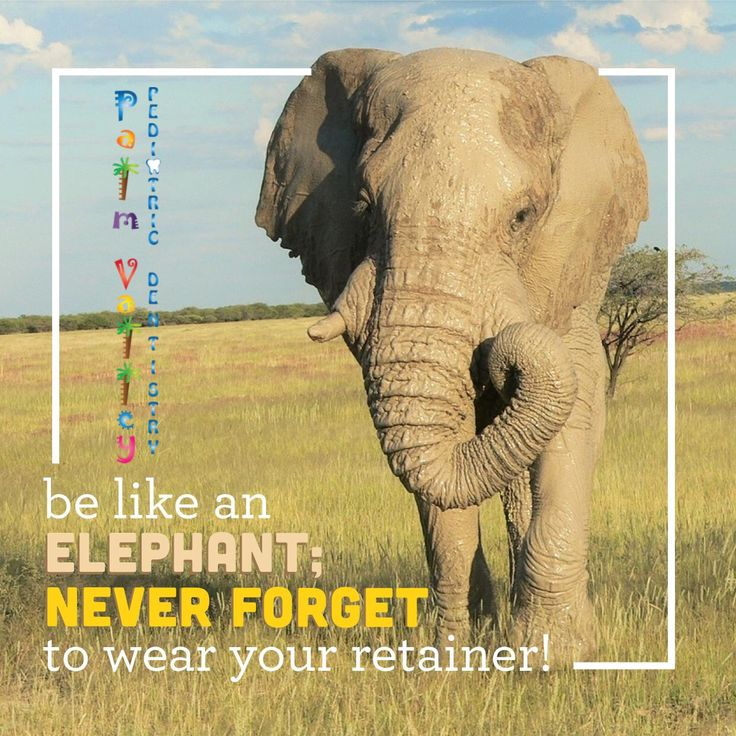 ELEPHANTS NEVER FORGET--and neither should you! Remember to wear your retainer and your teeth will stay straight for a lifetime!  Palm Valley Pediatric Dentistry    www.pvpd.com #pediatricdentist #instaweatherpro #sky #weather #world #love #instaweather #nature #hiking #TuesdayMotivation #DayoftheGirl #dentistry #health #dental #healthcare #dentist #smile #teeth #ortho