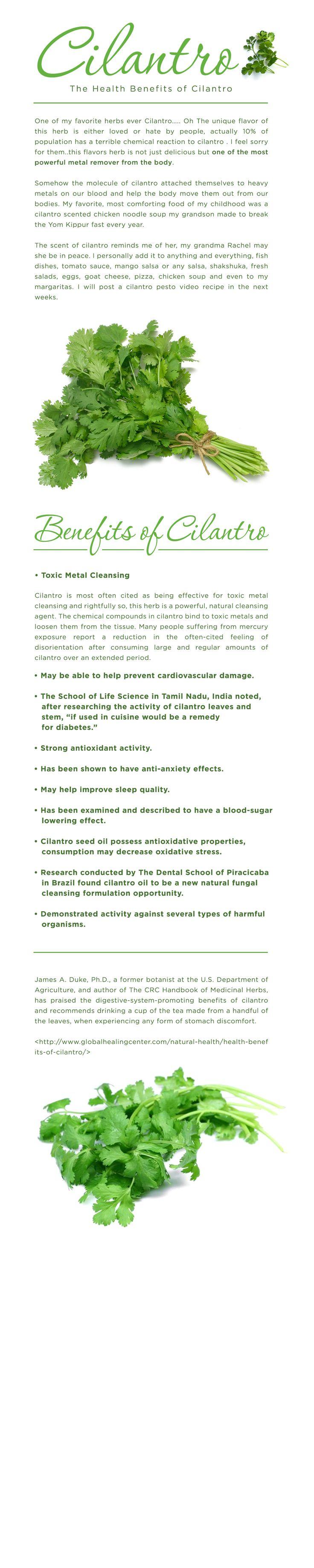 Health benefits of Cilantro — The Spice Detective