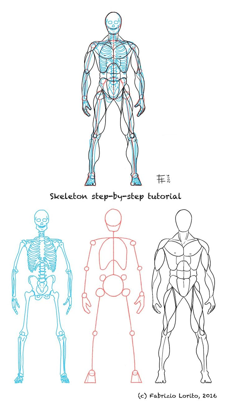 Fabrizio Lorito: Step-by-step tutorial - Skeleton structure, front