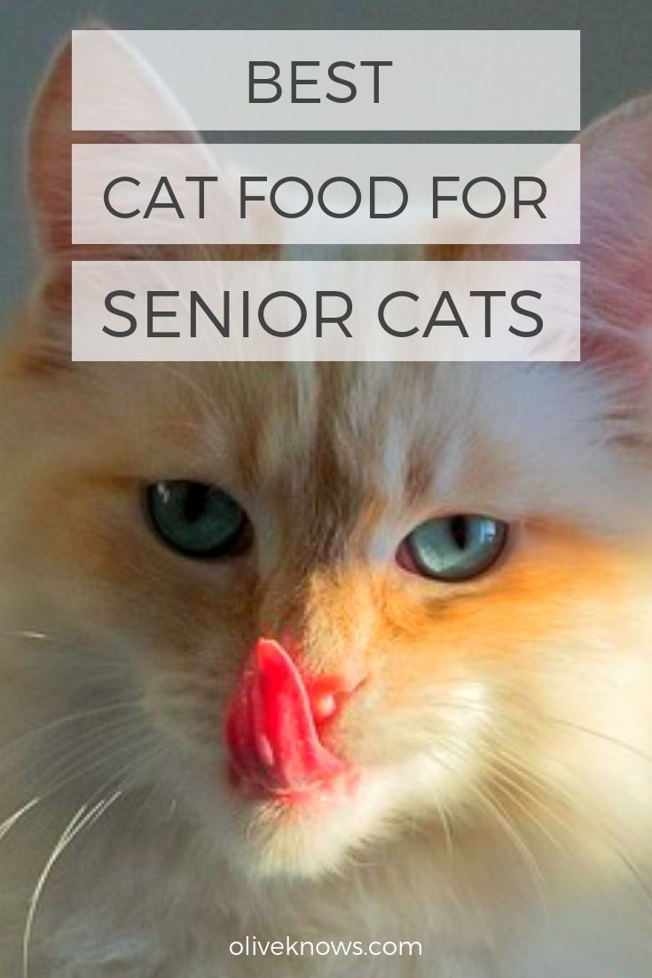 Best Cat Food For Senior Cats Wet And Dry Food Best Cat Food