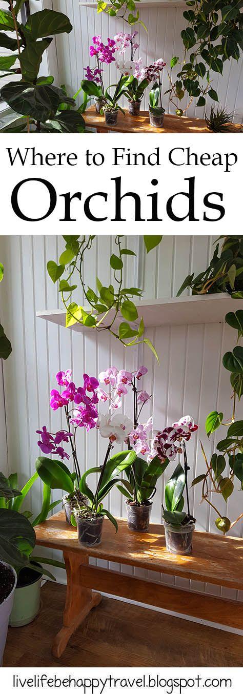 Affordable Orchids - nursery - tropical plants - house plants - garden center