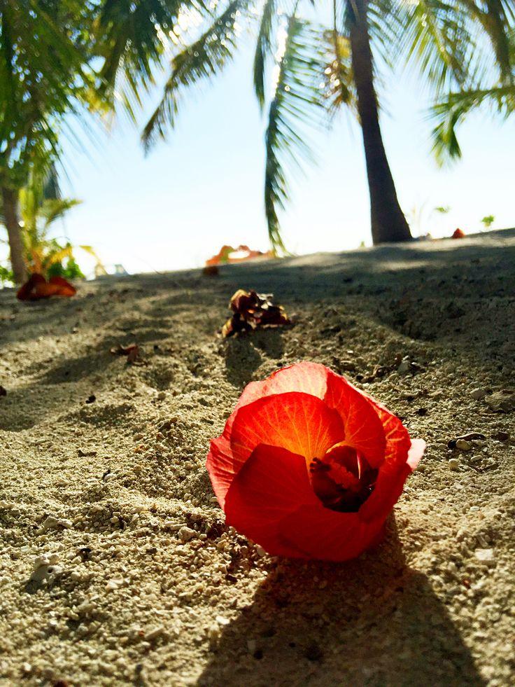 Maldives love flower