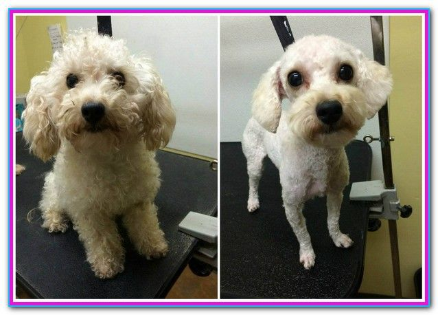 Affordable Dog Grooming Raleigh Nc Reviews On Cheap Dog Grooming In Raleigh Nc Dogtopia Unleashed Aussi Dog Grooming Can Dogs Eat Blueberries Dog Joints