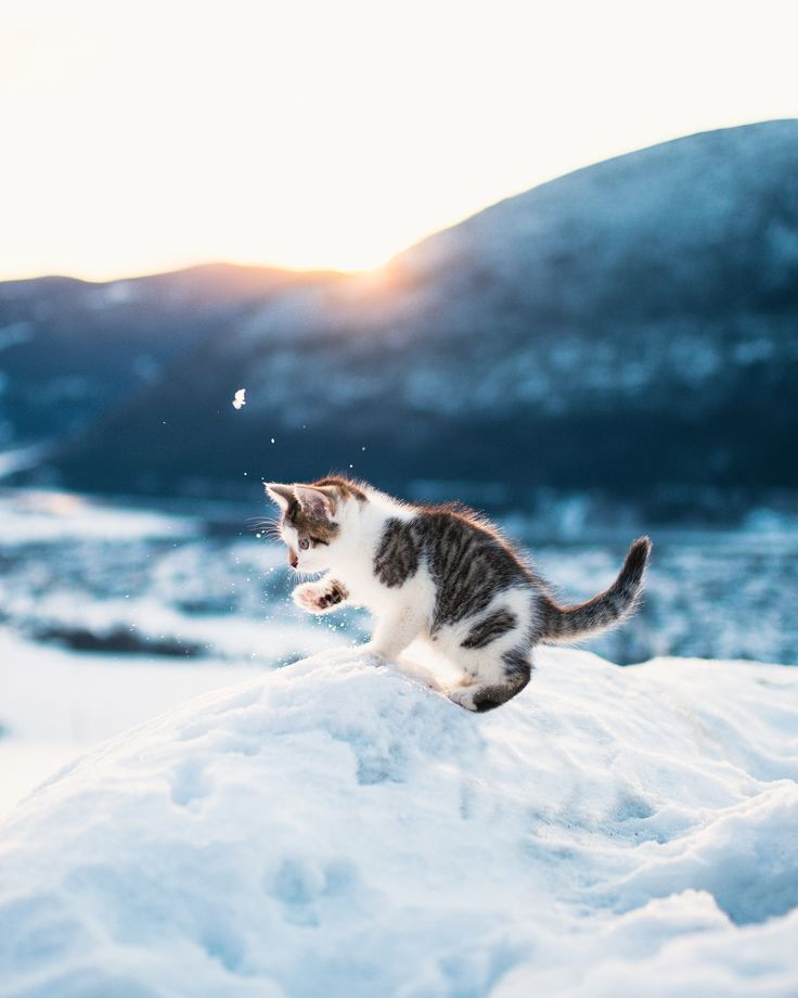 Starting the year by playing with kittens in the snow, 2017 is off to a great start! -   Anyone here from Reddit? (Apparently one of my photos briefly was # 1 today)