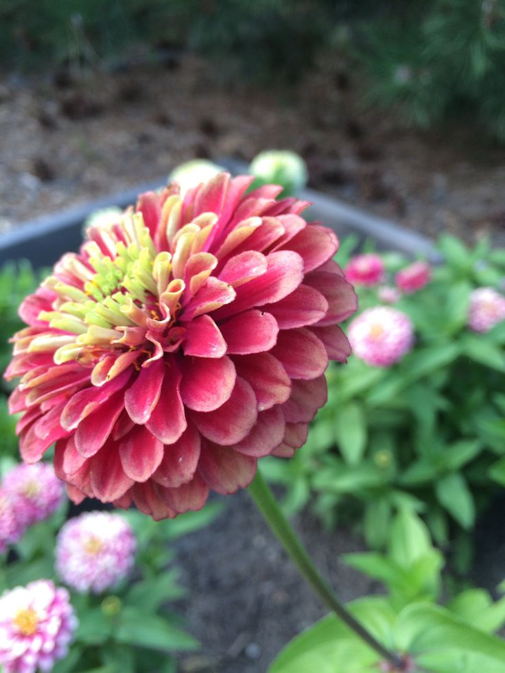 72 best Gardening images on Pinterest Gardening Plants and Flowers