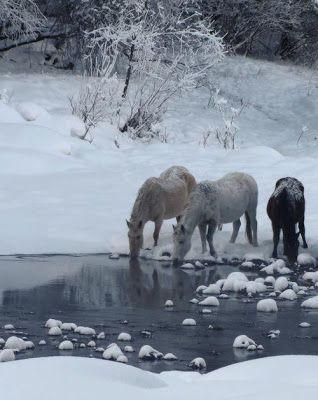 La Confidenza Lenta: Inverno, Cavalli e rodei -  Animali Felici vs Anim...
