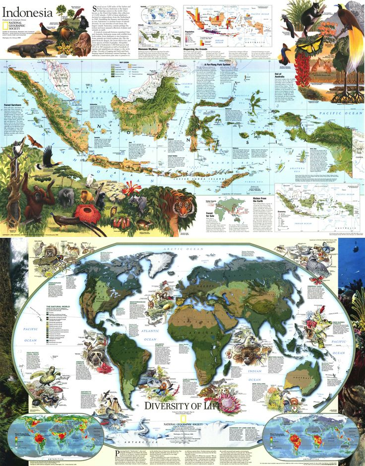Indonesia Infographic 294 best Indonesian images on